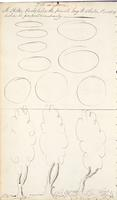 [Unnumbered] verso, [Elements of the graphic arts, cont'd.]
