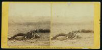Confederate soldiers as they fell, near the Burnside Bridge, at  the battle of Antietam