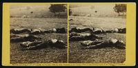 Federal soldiers as they fell, at battle of Gettysburg