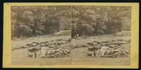 A harvest of death on the battle-field of Gettysburg