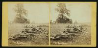 View near the [Em]mittsburg road on battle-field [of] Gettysburg