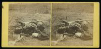 One of Ewell's Corps as he lay on the field, after the battle of the 19th May, 1864