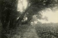 Flatlands: wooded path on Lott farm near the head of Garretson's Creek, 1922.
