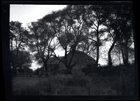 Jamaica: unidentified old wooden house surrounded by trees, undated.