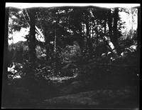 Westchester County: [unidentified woods, undated.]