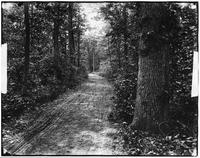 Brooklyn: wooded path, Bergen Beach, undated.