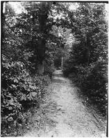 Brooklyn: path through woods, Bergen Beach, undated.