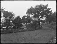 Path down to the shore below Shore Road, Bay Ridge, Brooklyn, undated. Photographed for Joseph P. Day.
