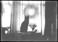 Reddy the cat seated on a window sill beside a fish bowl, undated  (ca. 1911-1921).
