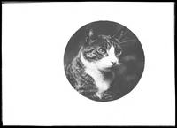Matted circular portrait of Reddy the cat, undated (ca. 1912).