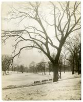 [Boston] Common & frog-pond, by tree.