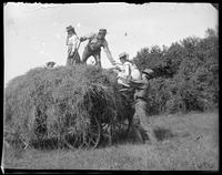 Lifting Edith up onto a load of hay, Garrison, N.Y., 1902.