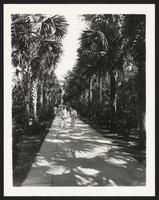 Palm Beach Hotel, people on walkway with palm trees, undated [circa 1900-1910].